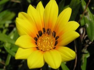 Gran flor amarilla