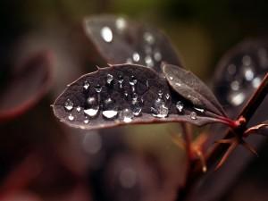 Brillantes gotas de agua sobre las hojas