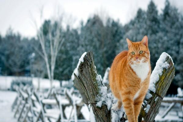 Gato entre la nieve