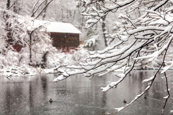 Cae nieve sobre la casa y los árboles