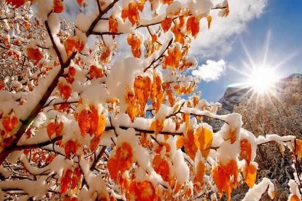 Rayos de sol entre las ramas cubiertas de nieve