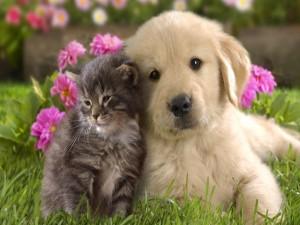 Bonita amistad