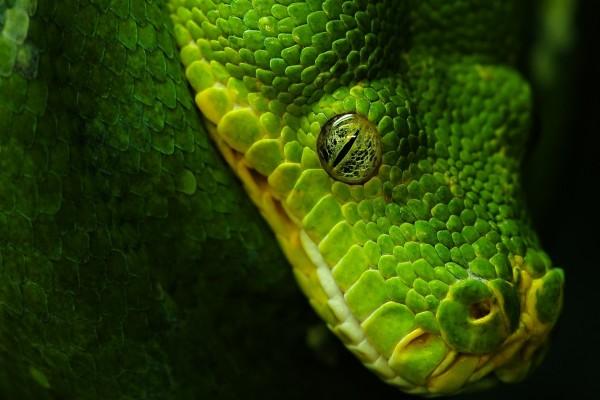 El ojo de la serpiente
