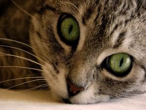 Postal: Ojos de gato