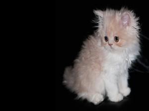Gatito con ojos marrones