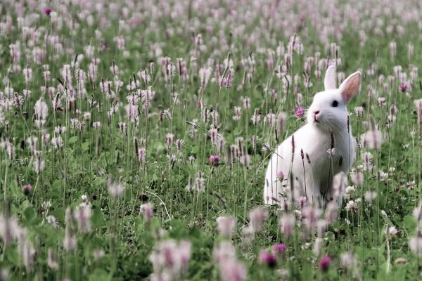 Liebre entre flores