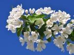 Rama con flores blancas