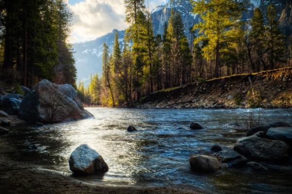 Río y pinos