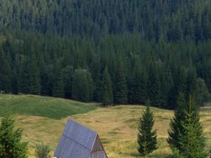 Postal: Pinar y el tejado de la cabaña