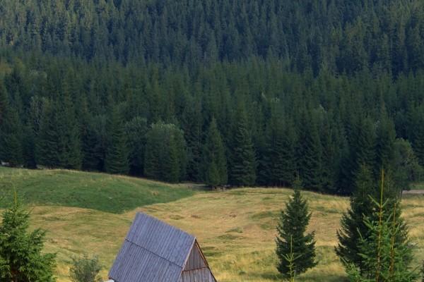 Pinar y el tejado de la cabaña