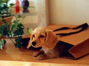 Perrito en la bolsa de papel