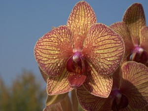 Orquídea con gotas de agua