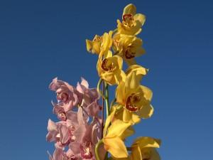 Ramas de orquídeas de dos colores