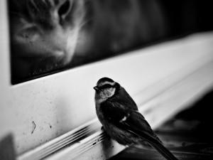 Gato observando al pájaro