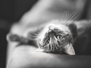 La mirada del gato en blanco y negro