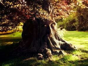 Postal: El árbol despierto