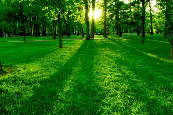 La luz del sol sobre la hierba del parque