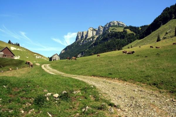 Vacas pastando en las montañas