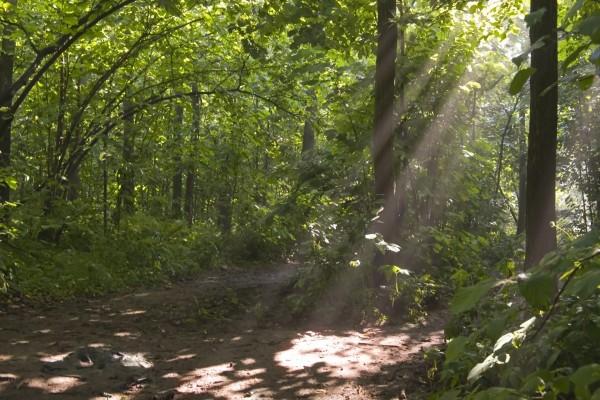 Luz en el bosque verde