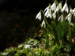 Flores blancas en la oscuridad de la noche