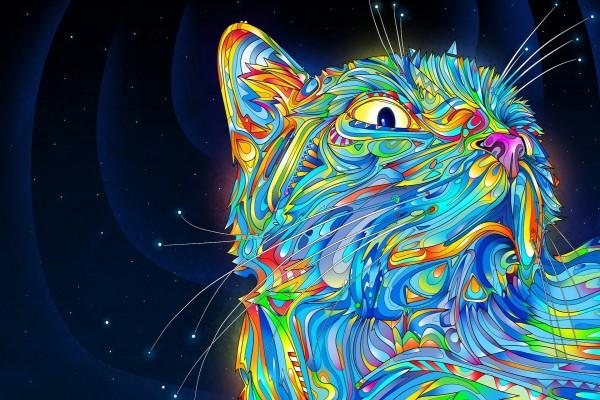 Gato de colores en una noche estrellada