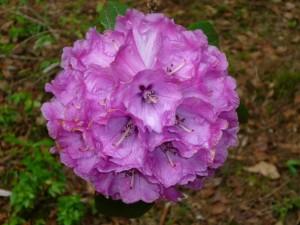 Conjunto de florecillas moradas