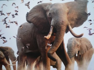Postal: Elefantes y pájaros