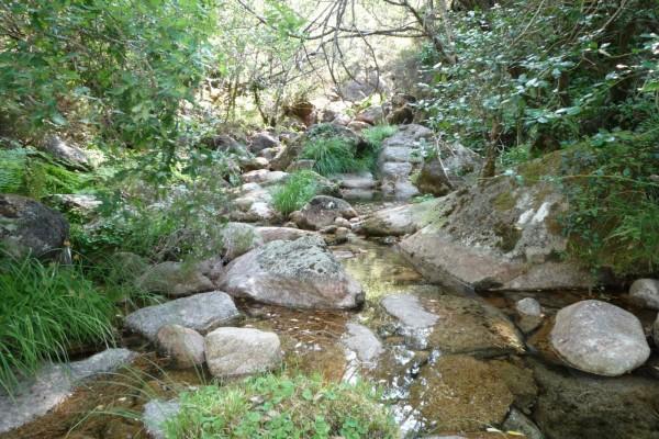 Pequeño río en la naturaleza