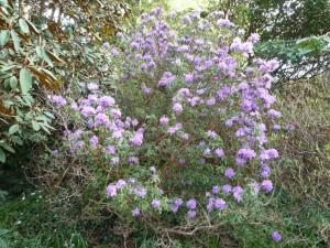Arbusto con flores