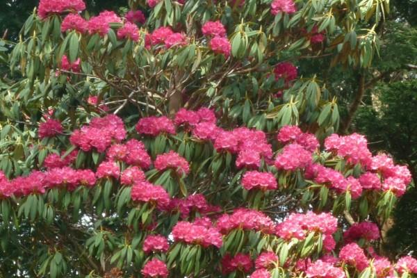 Flores rosas y largas hojas