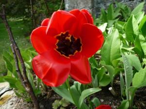 Flor roja en el jardín