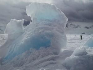Postal: Pingüino en el hielo