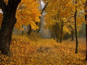 Postal: Árboles y hojas otoñales