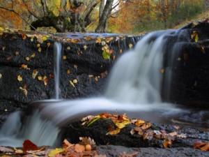 Postal: Agua fluyendo por la cascada