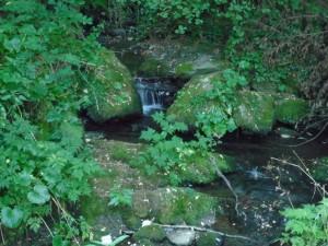 Vegetación verde a orillas del río