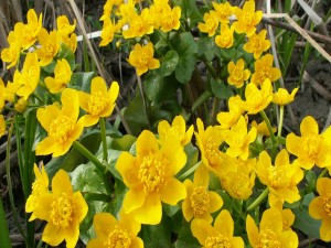 Postal: Flores amarillas mojadas