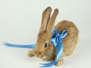 Conejo con lazo azul