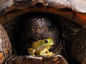 La rana y la tortuga