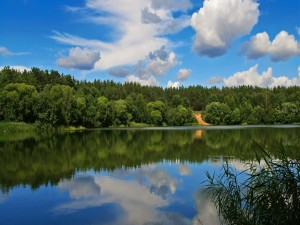 Postal: Árboles junto al lago