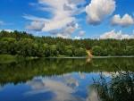 Árboles junto al lago
