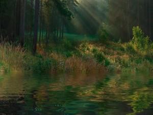 Postal: En el río del bosque