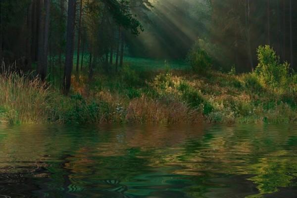 En el río del bosque