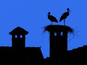 Cigüeñas sobre una chimenea