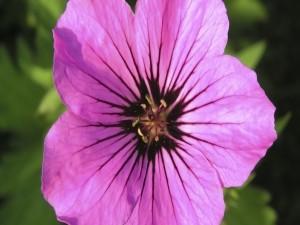 Postal: Flor con finos pétalos