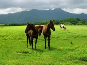 Postal: Caballos en la hierba verde