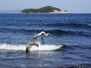 Postal: Tronco en el mar