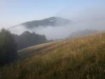Niebla en la naturaleza