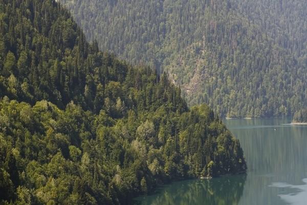 Grandes pinos junto al lago
