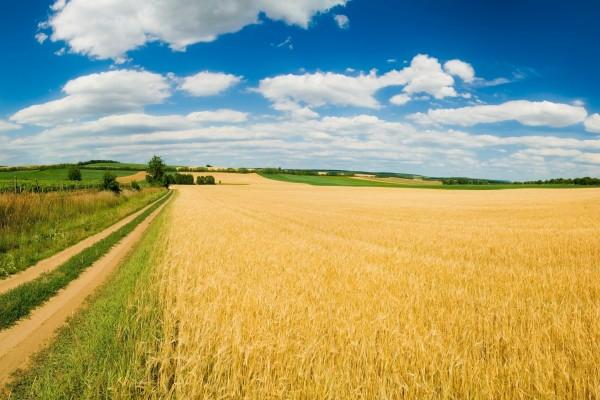 Camino de tierra junto al campo