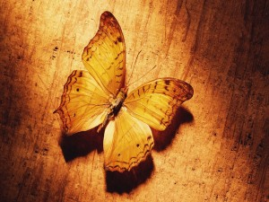 Mariposa mimetizada con la madera